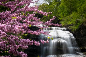 Shequaga Falls Bloom